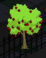tsto apple tree