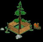 redwoodlevel2