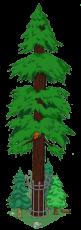 redwoodlevel8