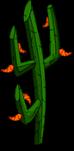 Hellfire_Pepper_Cactus